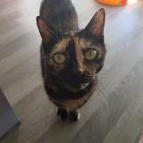 Mani, Chat à adopter