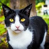 Iris, Chat à adopter