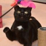 Klakette, Chat à adopter