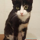 Airelle, Chat à adopter