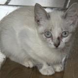 Sato, Chaton à adopter