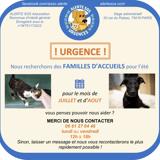 Cherche famille d'accueil meme temporaie sur region parisienne, Chaton à adopter