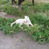 Wuendi, Chien à adopter
