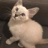 Mirage, Chaton à adopter