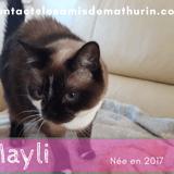 Mayli, Chat à adopter