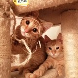 Rufus et sonic, Chaton à adopter