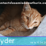 Ryder, Chaton à adopter