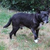 Andorre, Chien à adopter