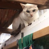 Blanche neige, Chat à adopter