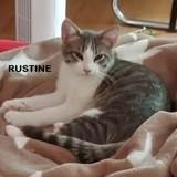 Rustine, Chaton européen à adopter