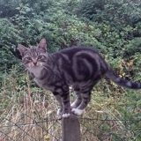 Tanya, Chat à adopter