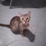 Icha, Chat à adopter