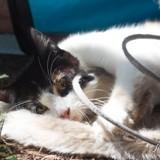 Tika, Chat à adopter