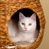 Bianca, Chat à adopter
