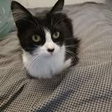 Ofélia, Chat à adopter