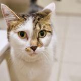 Joddie, Chat à adopter