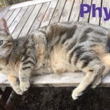 Phybie et pepito, Chat à adopter
