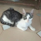 Leo, Chaton à adopter
