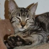 Nylla, Chaton à adopter