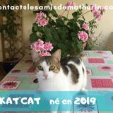 Kat'cat, Chat à adopter