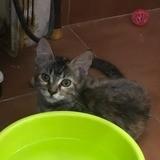 Lara, Chaton à adopter