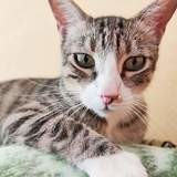 Rayo, Chat à adopter