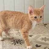 Rosace, Chaton à adopter