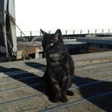 Ragnar, Chat à adopter