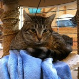 Kenda, Chat à adopter