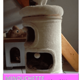 Minouchette, Chat à adopter