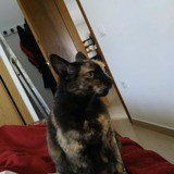 Paloma, Chat à adopter