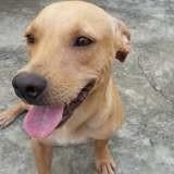 Jasper, Chien à adopter