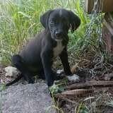 Nora, Chiot à adopter