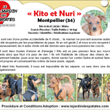 Nuri et kito, Chiot chihuahua, pinscher à adopter