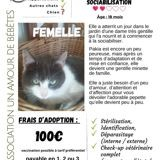 Pakia, Chat à adopter