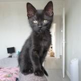 Luena, Chaton à adopter