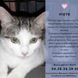 Piotr, Chaton à adopter