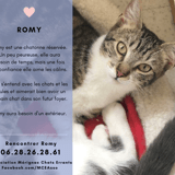 Romy, Chaton à adopter