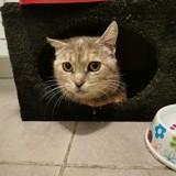Azalée, Chat à adopter