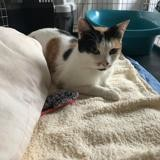 Loupie, Chat à adopter