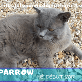 Sparrow, Chat à adopter