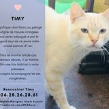 Timy, Chat à adopter