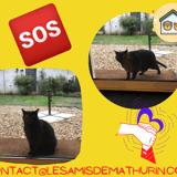 Urgence chat abandonné, Chaton à adopter