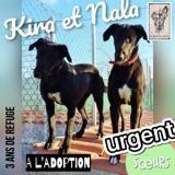 Kira et nala, Chien lévrier espagnol à adopter