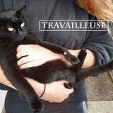 Travailleuse, Chat à adopter