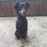 Ony, Chien à adopter