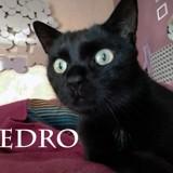 Pedro gardien de couette, Chat à adopter