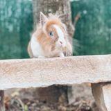 Karamel, Animal à adopter