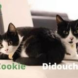 Cookie et didouche ensemble, Chat à adopter