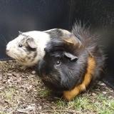Bobby & cokette, couple de choc, Animal à adopter